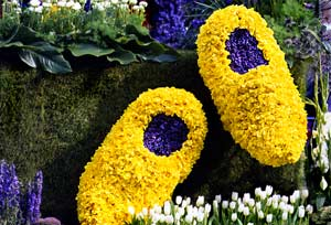 wooden shoes in flowerbulbs